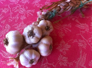 Garlic on braid